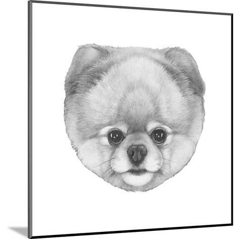Original Drawing of Pomerania. Isolated on White Background.-victoria_novak-Mounted Art Print