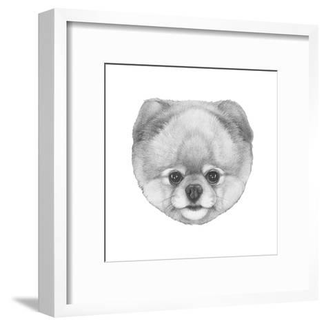 Original Drawing of Pomerania. Isolated on White Background.-victoria_novak-Framed Art Print