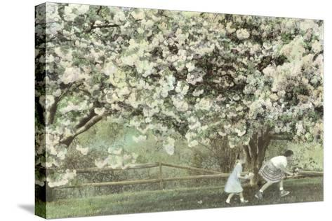 Under the Apple Blossom Tree-Betsy Cameron-Stretched Canvas Print