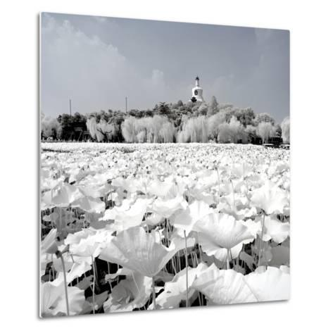 China 10MKm2 Collection - Another Look - Lotus Lake-Philippe Hugonnard-Metal Print