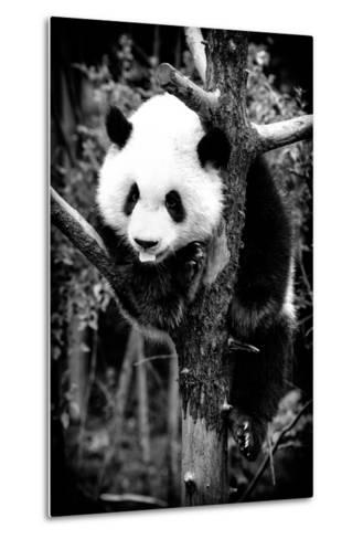China 10MKm2 Collection - Giant Panda Baby-Philippe Hugonnard-Metal Print