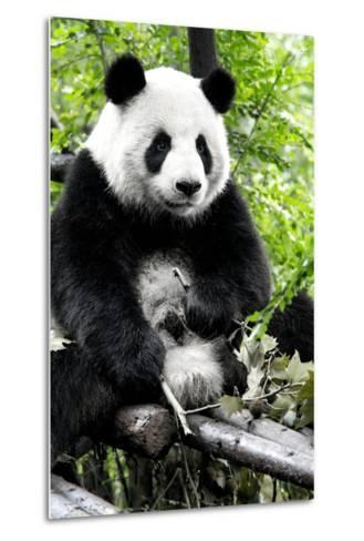 China 10MKm2 Collection - Giant Panda-Philippe Hugonnard-Metal Print
