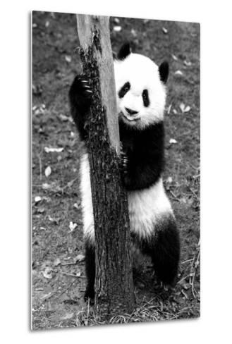 China 10MKm2 Collection - Giant Panda Baby-Philippe Hugonnard-Metal Print