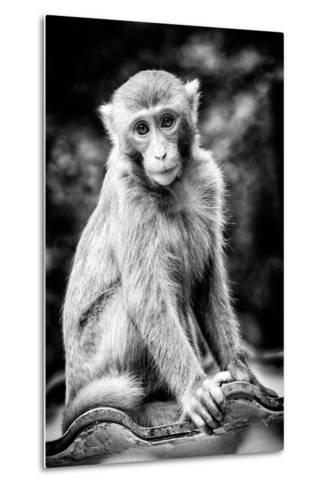 China 10MKm2 Collection - Monkey Portrait-Philippe Hugonnard-Metal Print