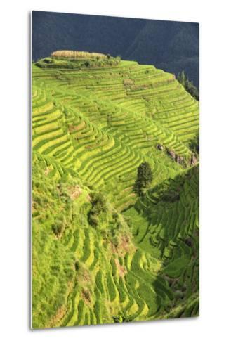 China 10MKm2 Collection - Rice Terraces - Longsheng Ping'an - Guangxi-Philippe Hugonnard-Metal Print