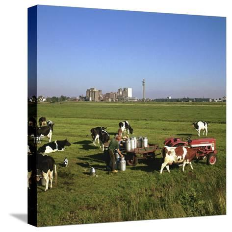 Cattle-Milking in Fields North-West of Amsterdam-CM Dixon-Stretched Canvas Print