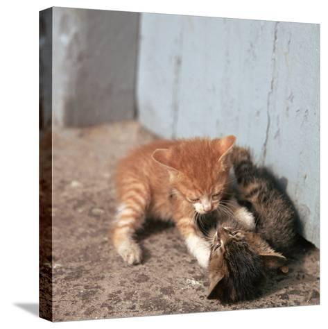Kittens in Heracleion, Crete-CM Dixon-Stretched Canvas Print