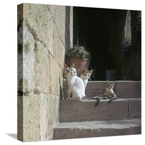 Kittens in Rhodes Old Town-CM Dixon-Stretched Canvas Print