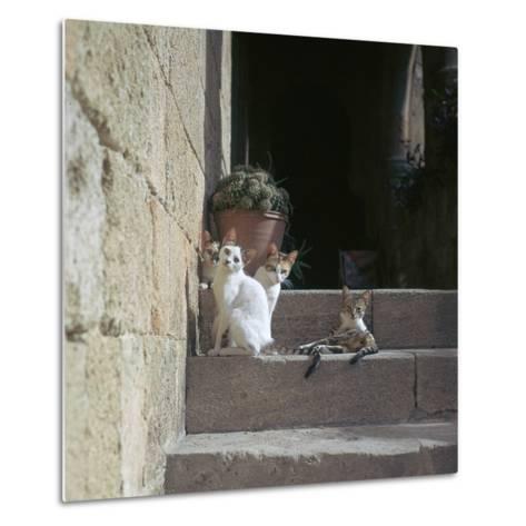 Kittens in Rhodes Old Town-CM Dixon-Metal Print