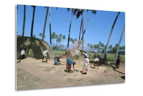 Threshing Rice, Near Madurai, Tamil Nadu, India-Vivienne Sharp-Metal Print