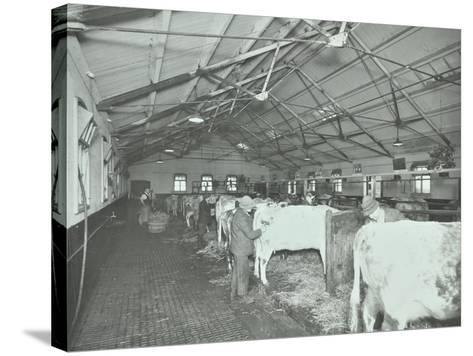 Grooming Cattle in a Cowshed, Claybury Hospital, Woodford Bridge, London, 1937--Stretched Canvas Print