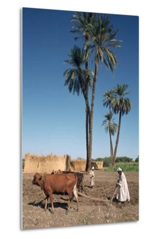 Farmer with an Ox-Drawn Plough, Dendera, Egypt-Vivienne Sharp-Metal Print