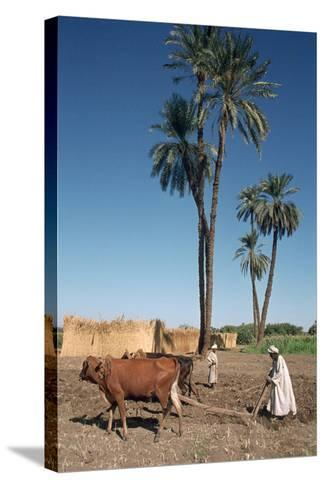 Farmer with an Ox-Drawn Plough, Dendera, Egypt-Vivienne Sharp-Stretched Canvas Print