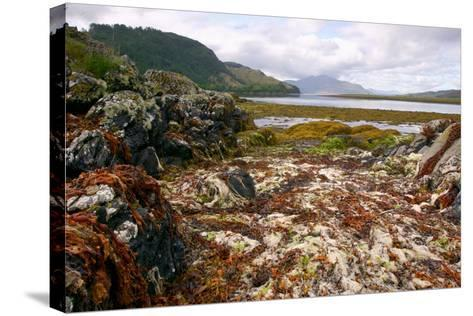 Seaweed Near Eilean Donan Castle, Highland, Scotland-Peter Thompson-Stretched Canvas Print