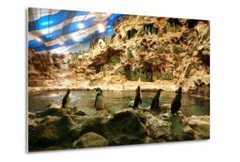 Penguins, Loro Parque, Tenerife, Canary Islands, 2007-Peter Thompson-Metal Print