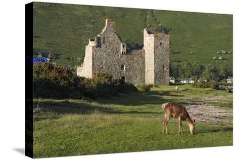 Lochranza Castle, Arran, North Ayrshire, Scotland-Peter Thompson-Stretched Canvas Print