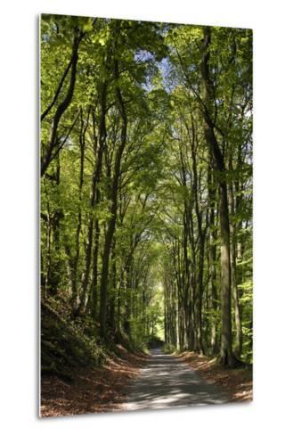 Tree-Lined Road, Castleton, Derbyshire-Peter Thompson-Metal Print