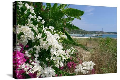 Flowering Shrubs and Palms, Katelios, Kefalonia, Greece-Peter Thompson-Stretched Canvas Print