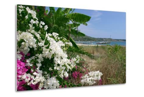 Flowering Shrubs and Palms, Katelios, Kefalonia, Greece-Peter Thompson-Metal Print