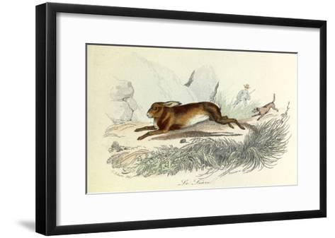 The Hare, Domestic Animals, from De Buffon-Georges-Louis Leclerc-Framed Art Print