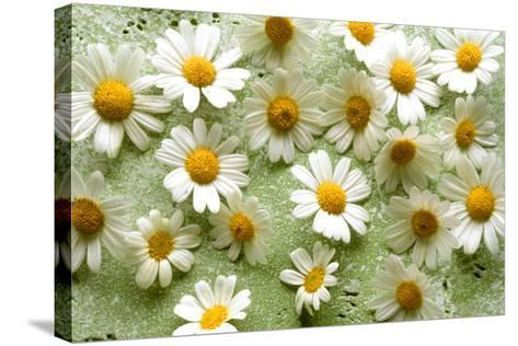 Daisies-Walter Cimbal-Stretched Canvas Print