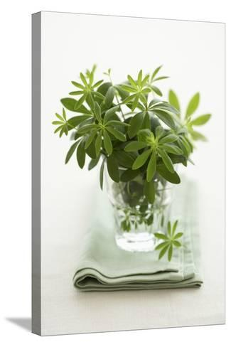 Woodruff in a Glass of Water-Marc O^ Finley-Stretched Canvas Print