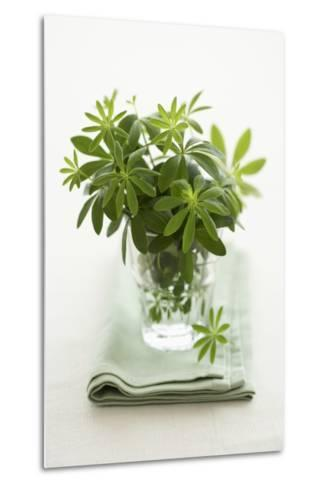 Woodruff in a Glass of Water-Marc O^ Finley-Metal Print