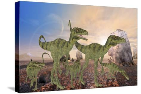A Family of Juravenator Dinosaurs Cross a Desert Area Hunting for Prey-Stocktrek Images-Stretched Canvas Print