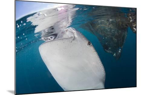 Close-Up View of a Whale Shark Breaching the Surface-Stocktrek Images-Mounted Photographic Print