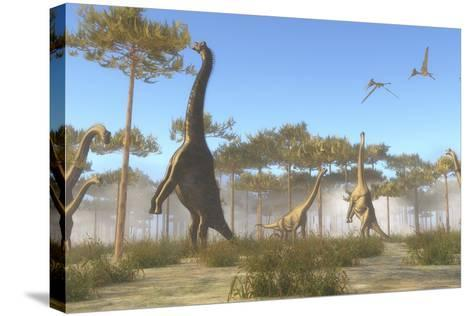 A Brachiosaurus Herd Grazing on Treetops-Stocktrek Images-Stretched Canvas Print