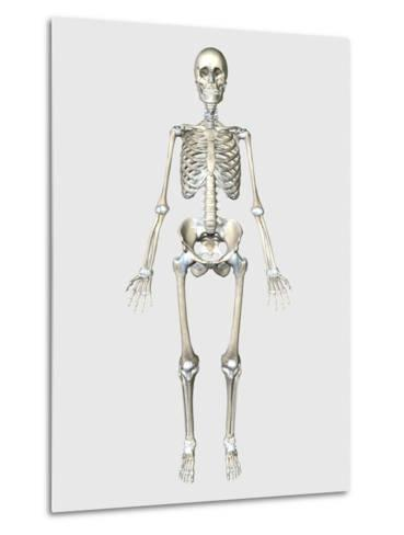 Front View of Human Skeletal System-Stocktrek Images-Metal Print