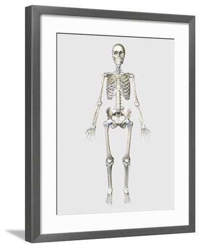 Front View of Human Skeletal System-Stocktrek Images-Framed Art Print