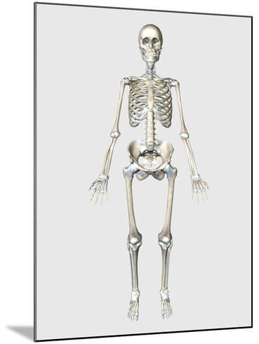 Front View of Human Skeletal System-Stocktrek Images-Mounted Art Print