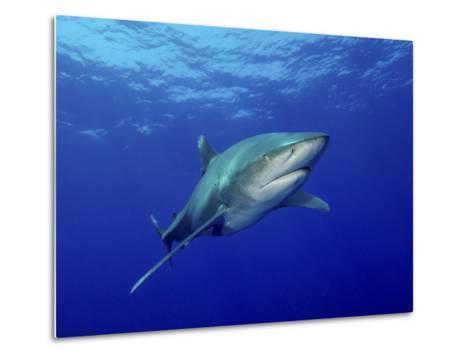 Oceanic Whitetip Shark, Cat Island, Bahamas-Stocktrek Images-Metal Print