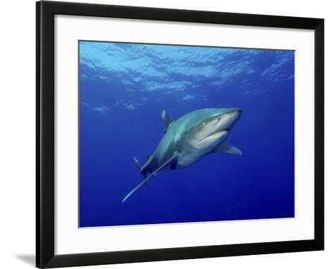 Oceanic Whitetip Shark, Cat Island, Bahamas-Stocktrek Images-Framed Art Print