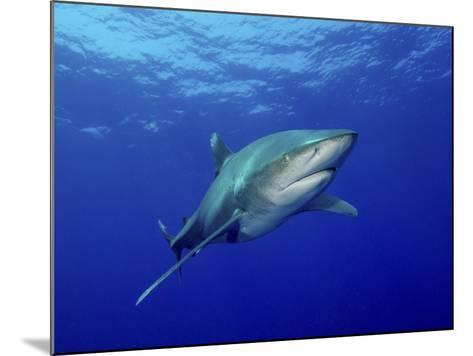 Oceanic Whitetip Shark, Cat Island, Bahamas-Stocktrek Images-Mounted Photographic Print