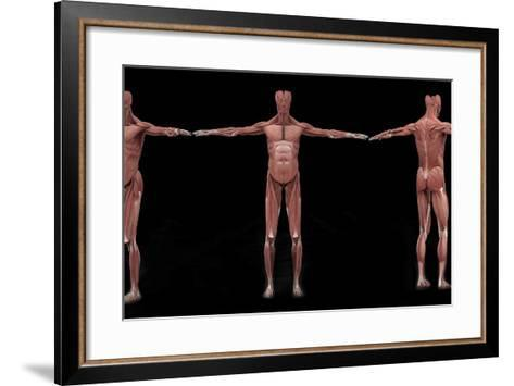 3D Rendering of Male Muscular System at Different Angles-Stocktrek Images-Framed Art Print