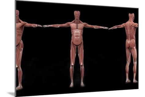 3D Rendering of Male Muscular System at Different Angles-Stocktrek Images-Mounted Art Print