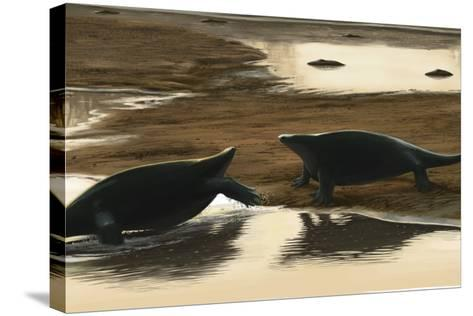 Cotylorhynchus Confrontation on the Water's Edge-Stocktrek Images-Stretched Canvas Print