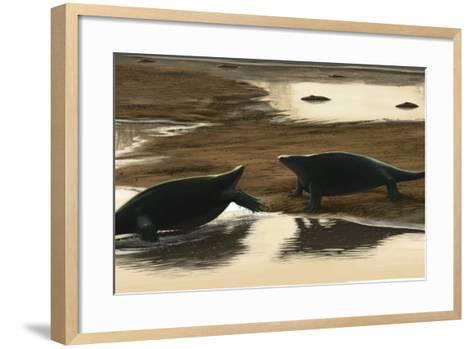 Cotylorhynchus Confrontation on the Water's Edge-Stocktrek Images-Framed Art Print