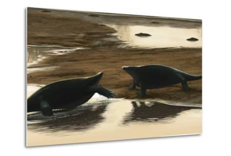 Cotylorhynchus Confrontation on the Water's Edge-Stocktrek Images-Metal Print