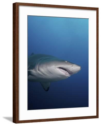 A Sand Tiger Shark Off the Coast of North Carolina-Stocktrek Images-Framed Art Print
