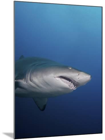 A Sand Tiger Shark Off the Coast of North Carolina-Stocktrek Images-Mounted Photographic Print