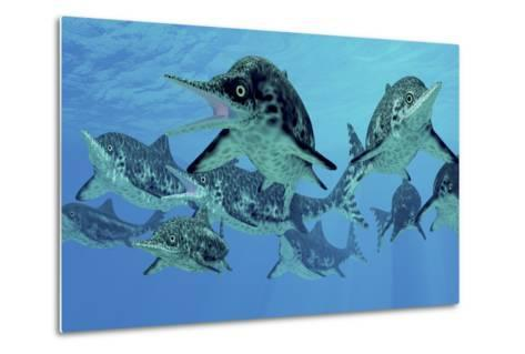 A Group of Ichthyosaurs Swimming in Prehistoric Waters-Stocktrek Images-Metal Print