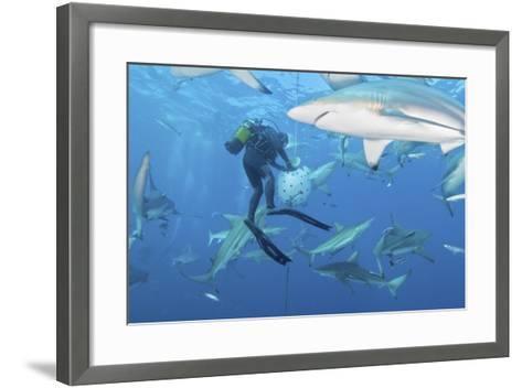 Oceanic Blacktip Sharks Waiting for Food from a Diver Near a Bait Ball-Stocktrek Images-Framed Art Print