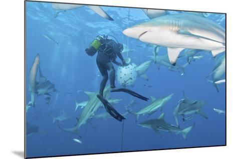 Oceanic Blacktip Sharks Waiting for Food from a Diver Near a Bait Ball-Stocktrek Images-Mounted Photographic Print