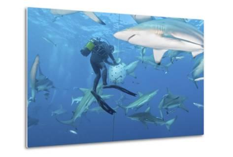 Oceanic Blacktip Sharks Waiting for Food from a Diver Near a Bait Ball-Stocktrek Images-Metal Print
