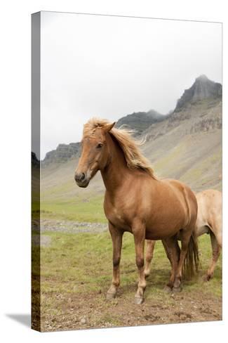 Horse- tonda55-Stretched Canvas Print