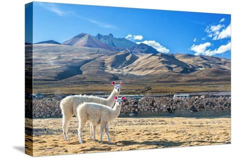 Pair of Llamas-jkraft5-Stretched Canvas Print