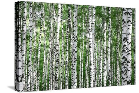 Trunks of Summer Birch Trees-Elena Kovaleva-Stretched Canvas Print